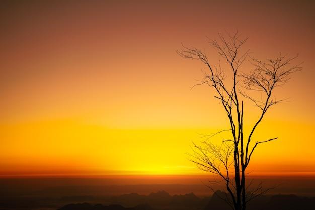 혹서 나 고온의 지구 온난화와 마른 나무.
