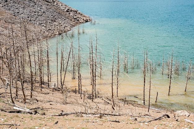 地球温暖化と水危機。干ばつの影響で枯れ木や乾燥した木がある湖の乾燥した海岸