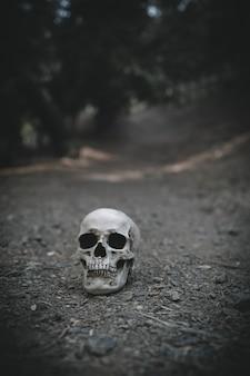 Gloomy cranium placed on soil