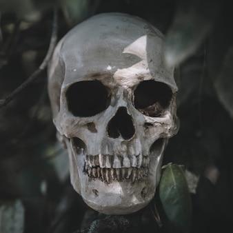 Gloomy cranium placed on twig