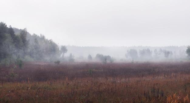 Мрачное туманное утро в поле с лесом. красивый туманный пейзаж осеннего леса.
