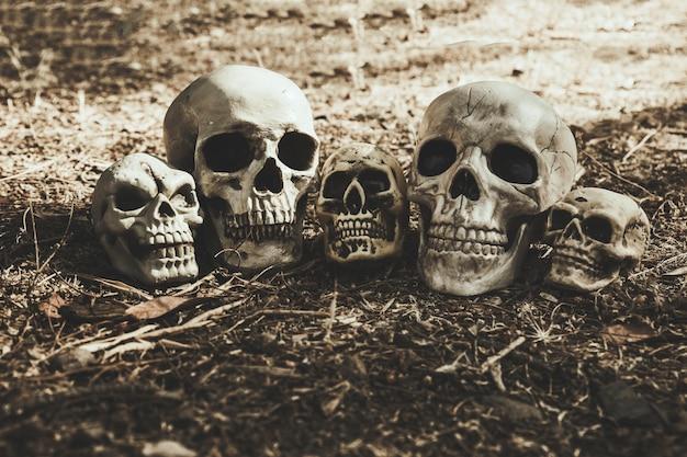 Gloomy skulls placed on ground