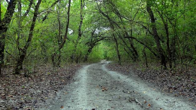 Мрачные деревья извилистая дорога опавшие листья
