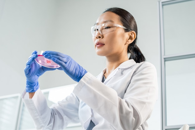 Gloved young female worker of food quality control in whitecoat holding petri dish with tiny sample of raw vegetable meat in front of herself