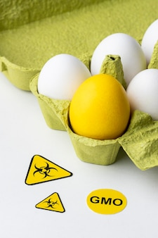 Gmo 과학 음식 노란색 계란