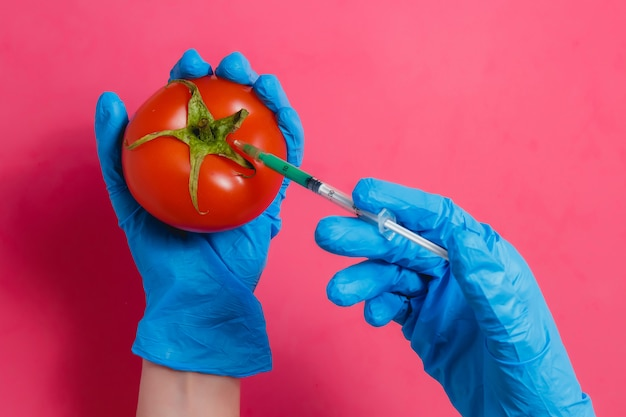 Gmo scientist injecting green liquid from syringe into red tomato