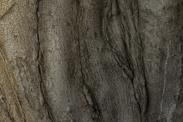 Gnarled tree roots