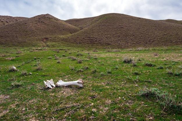 Обгрызенная кость животного на зеленой траве