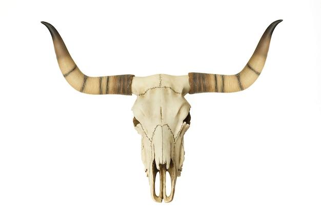 Goat skull isolated on white