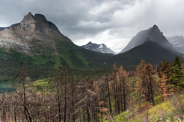 山脈を背景にした樹木、going-to-the-sun道路、氷河国立公園、氷河c