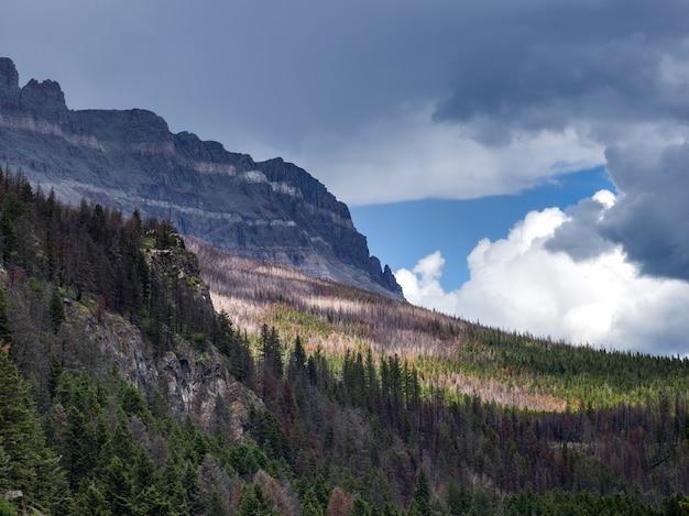山脈を背景にした樹木、going-to-the-sun road、glacier national pa