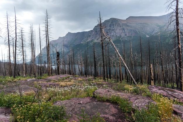 背景に山岳地帯の死んだ木、going-to-the-sun道路、氷河国立公園、