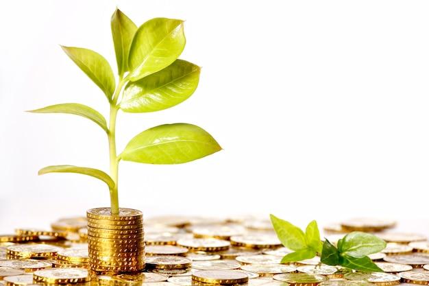 緑の葉が成長している金貨のお金