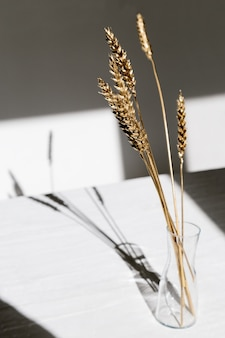 Gold colored ears of wheat in glass transparent vase with shadows