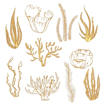 Gold corals illustrations