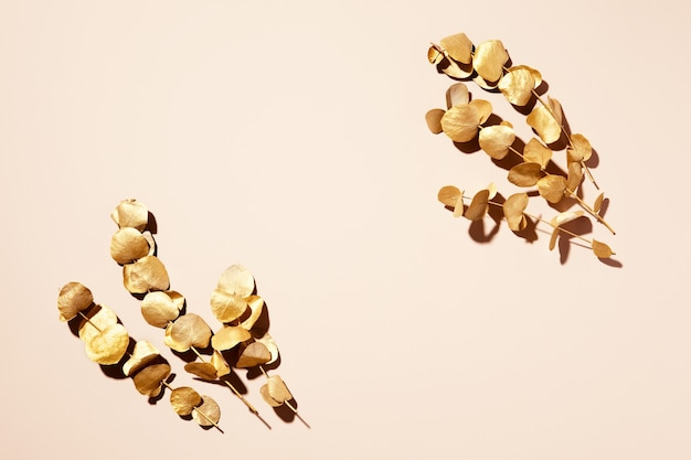 Золотые листья эвкалипта на бежевом фоне. плоская планировка, вид сверху.
