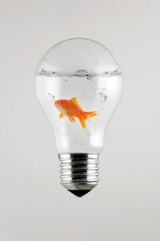 Золотая рыбка внутри лампочки