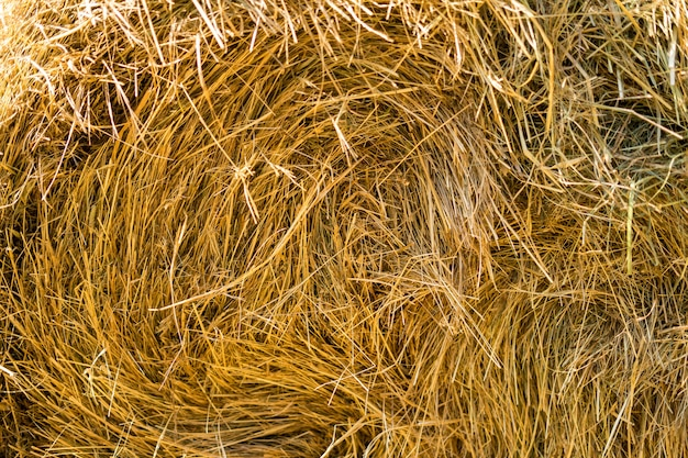 Gold natural straw texture in suuny day