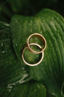 Золотые кольца на зеленых листьях, обручальные кольца, крупный план