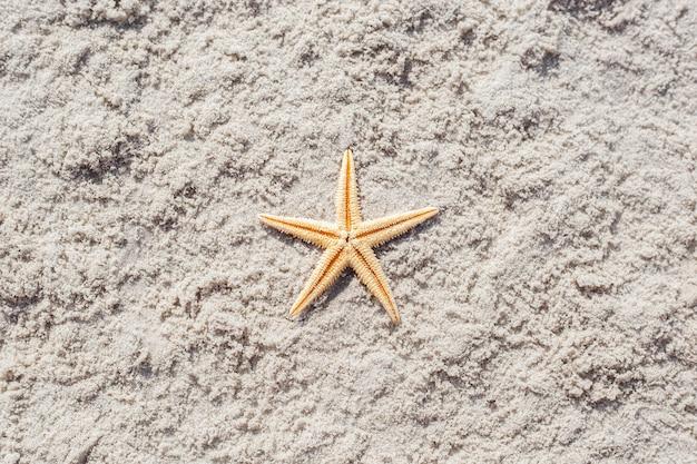 Золотая морская звезда на песчаном пляже. вид сверху, плоская планировка.