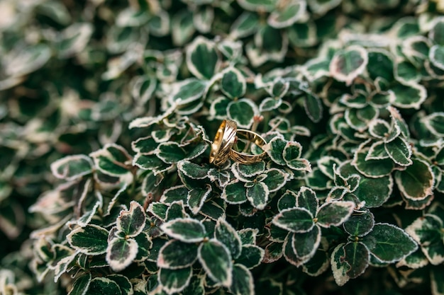 Gold wedding rings on green leaves