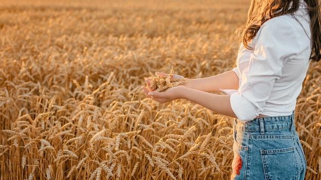 金麦畑のバナー。