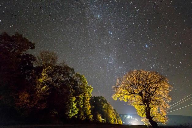 黒い星空と動く車の明るい光の下での黄金と赤の木