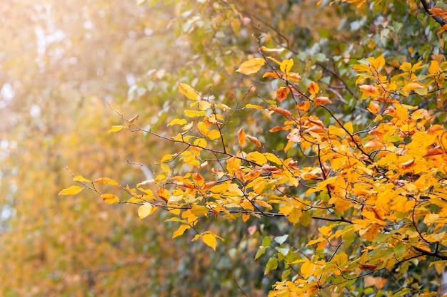 Золотая осень. осенний фон с желтыми листьями на ветке дерева