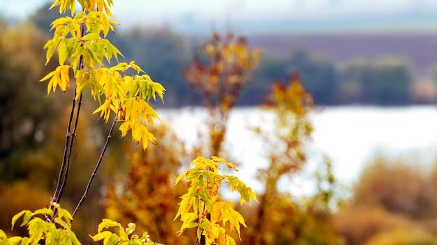 黄金の秋。川を背景に色とりどりの木の枝と秋の景色