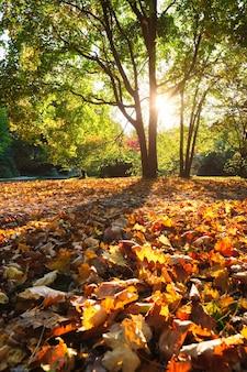 Golden autumn fall in  englischer garten. english garden with fallen leaves and golden sunlight.
