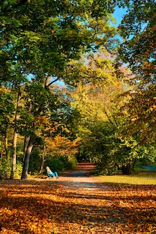 Golden autumn fall october in famous munich public park  englishgarten munchen bavaria germany