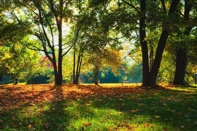 Golden autumn fall october in famous munich relax place  englishgarten munchen bavaria germany