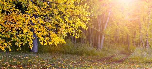 黄金の秋。晴天、パノラマの黄色の木と黄金の森