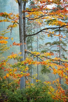Золотая осень в горно-лесном ландшафте