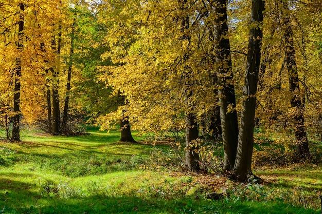 森の中の黄金の秋の風景