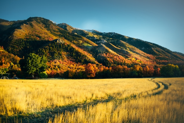 ユタ州の黄金の秋の風景を見る