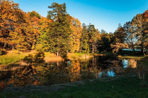 Золотая осень на берегу озера - осенний пейзаж у пруда