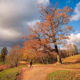 黄金の秋、晴れた日に駐車してください。秋の公園の路地。のどかな秋の風景。