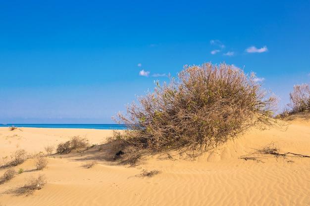Golden beach karpaz, north cyprus. golden sand beach and mediterranean sea in north cyprus