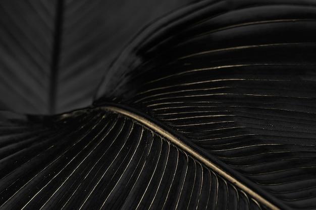 Golden bird of paradise leaf background design resource