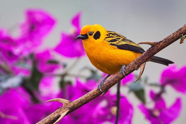 꽃과 나뭇 가지에 휴식하는 황금 새