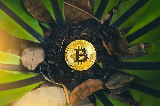 Golden bitcoin placed on a tree and dry leaves background, cryptocurrency virtual money and blockchain technology concept