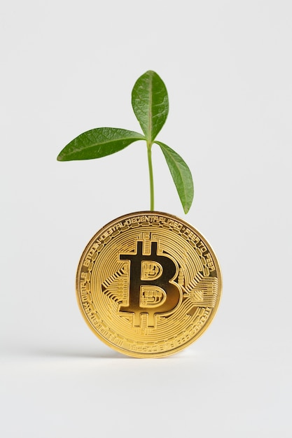 Golden bitcoin with plant behind it