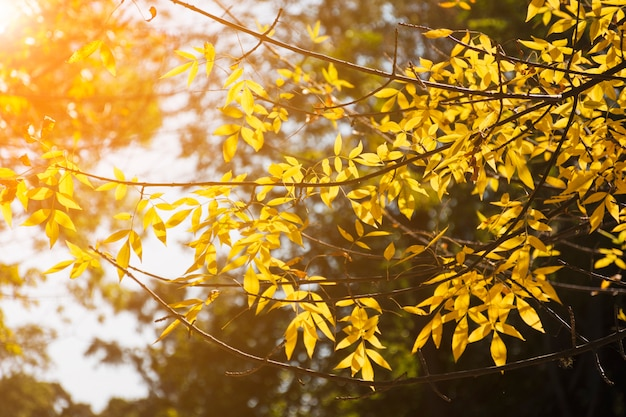 Golden branches in autumn sunlight