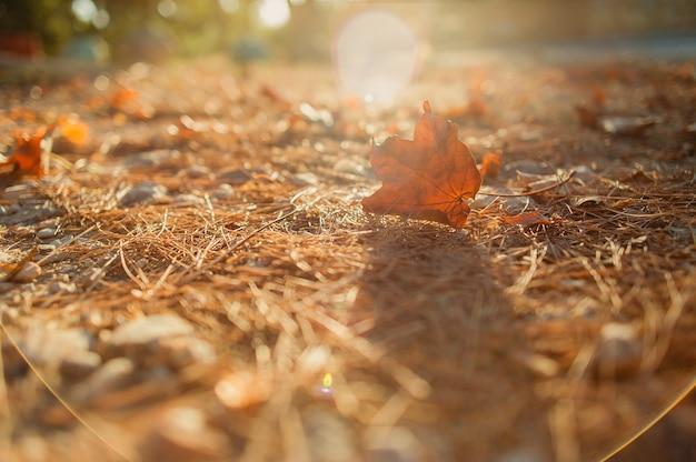 秋の公園の黄金色の紅葉