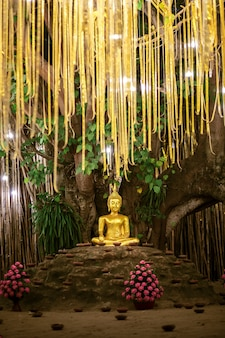 Golden buddha under bodhi tree among lanterns in phan tao temple
