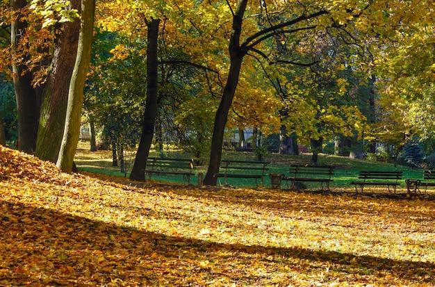都市公園の木々の影と紅葉の黄金のじゅうたん。