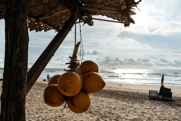 Golden coconuts on the beach