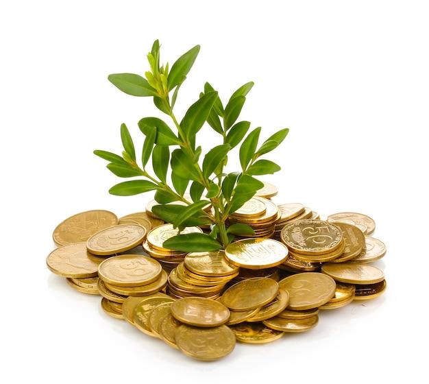 황금 동전과 식물 흰색 절연