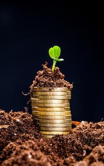 젊은 식물을 가진 토양에서 황금 동전입니다. 돈 성장 개념입니다.